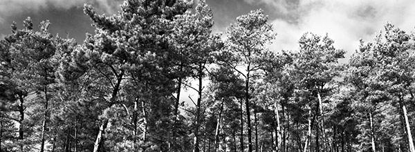Waldstück nahe Egelsbach